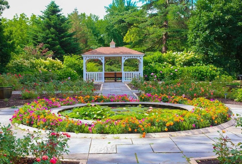 flowers in New Jersey rose gardens