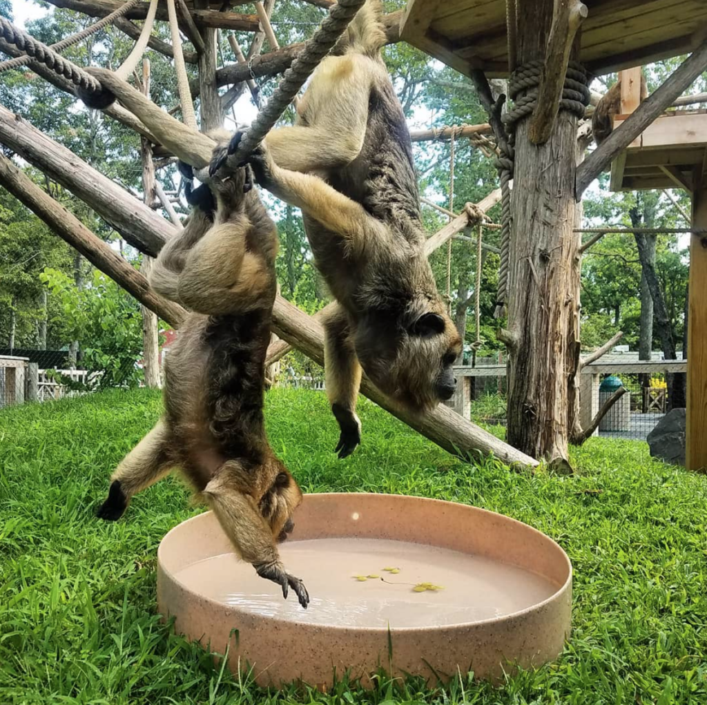 cape may county zoo in New Jersey