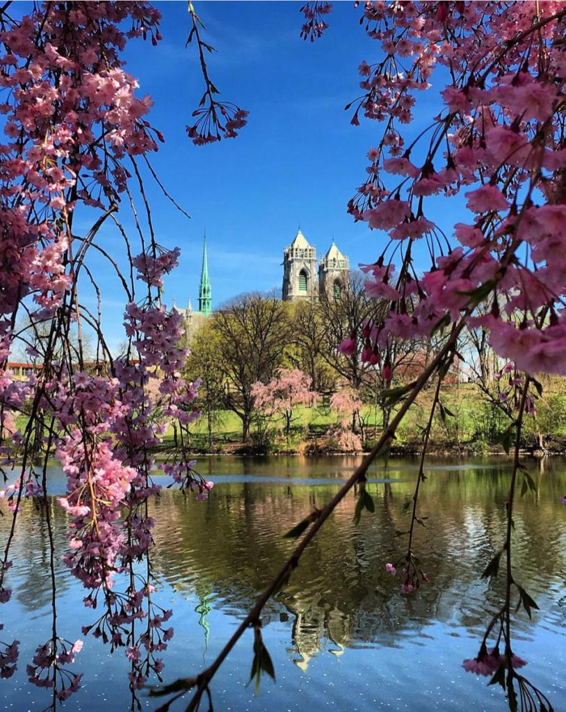 flowers in New Jersey