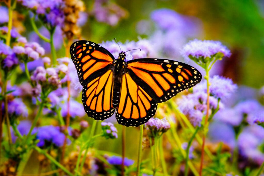 things to do in NJ, butterfly gardens in NJ