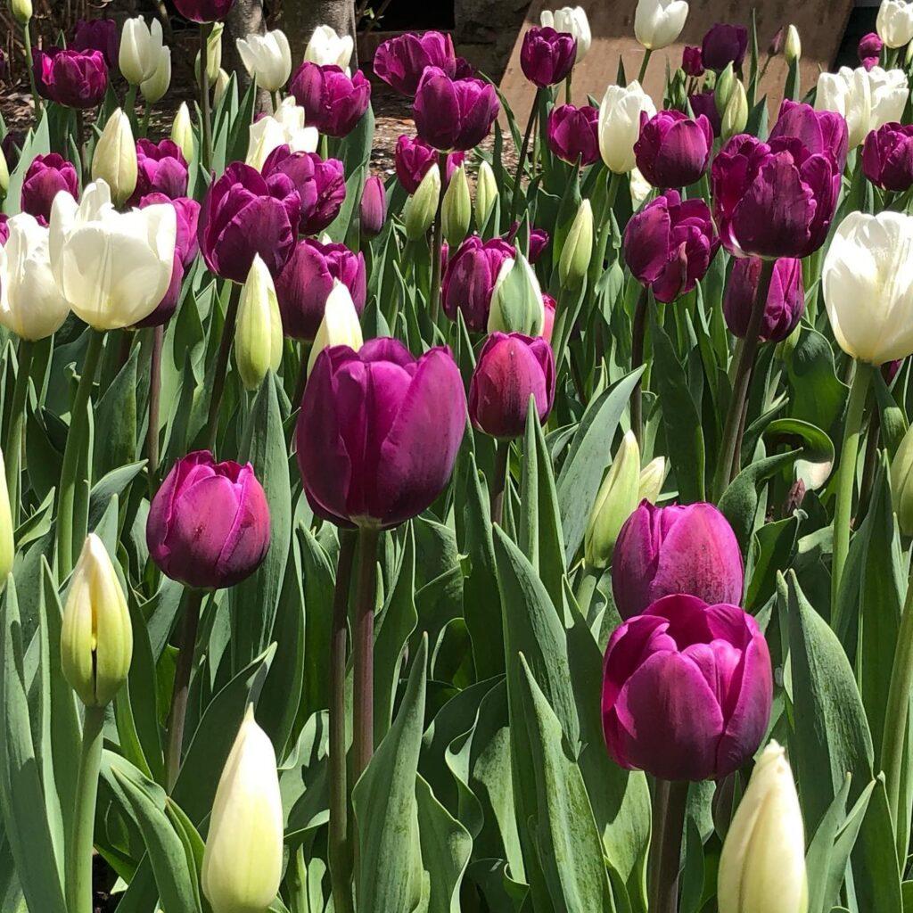 Frelinghuysen Arboretum morristown nj gardens
