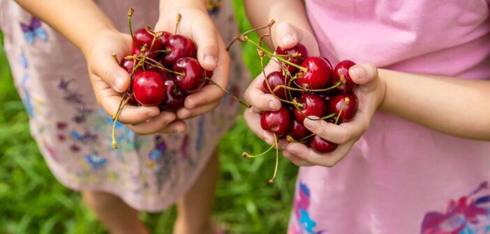 Cherry Picking in NJ