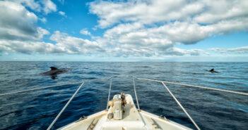 NJ whale watching