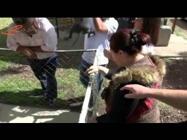 Xoloitzcuintle, un perro ancestral