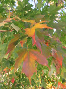 Leaves in transition