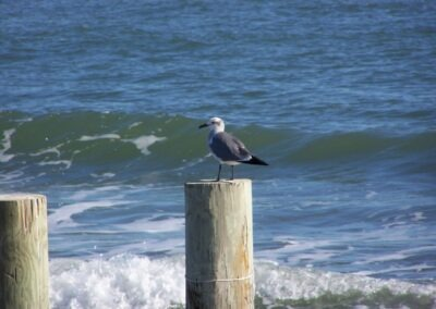 There's something about a bird sitting on a piling that's photogenic.