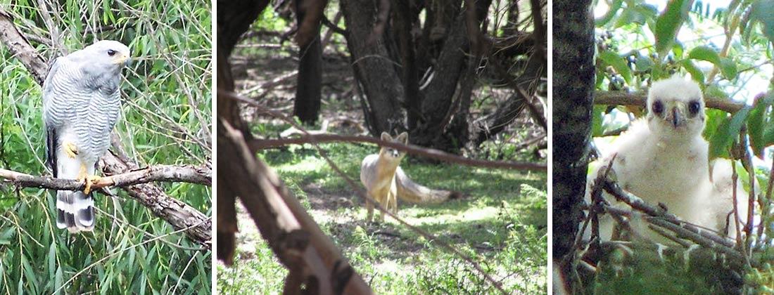 Wildlife of the Santa Cruz River
