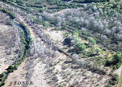 Extensive Tree Die-Off in Spring 2005
