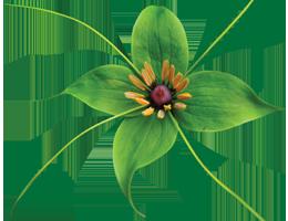 Virginia Burt - Vancouver Hardy Plant Group