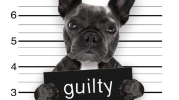 plead guilty