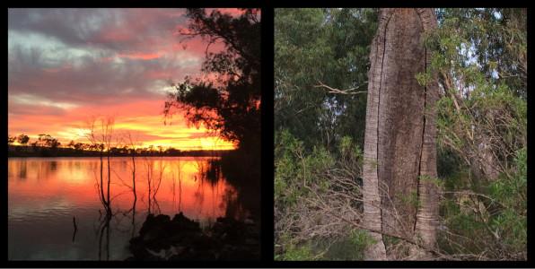 Sunrise on the Murray River, Original Canoe Tree