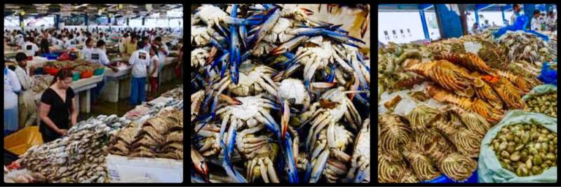 Fish Market. Deira. Dubai. UAE