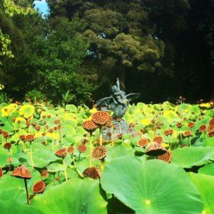Botanic Gardens. Adelaide. South Australia. Australia.
