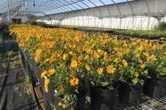 Heated Greenhouse Grow Capacity