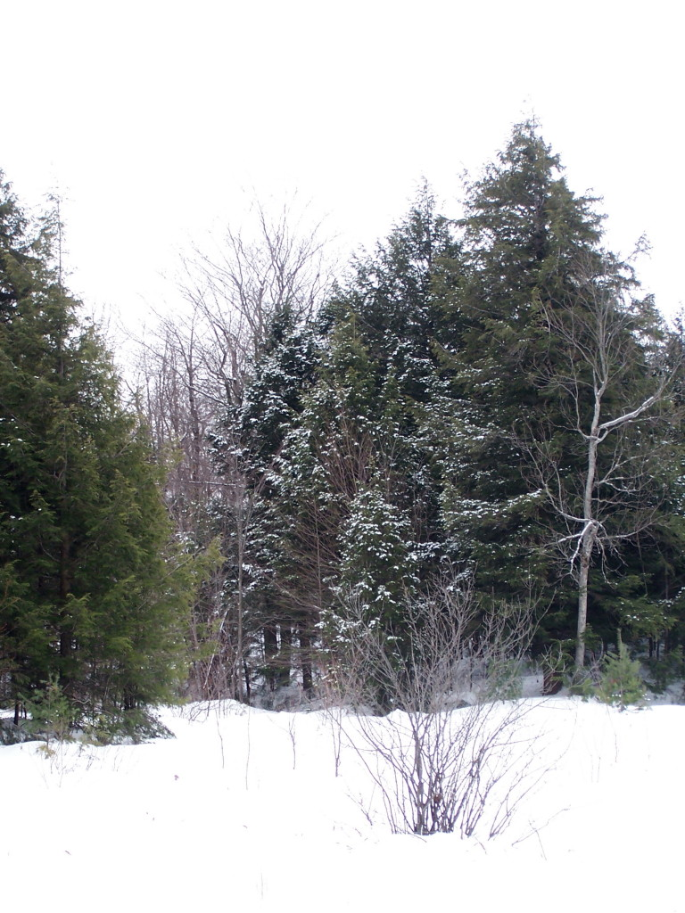 Gatineau Park Scenery