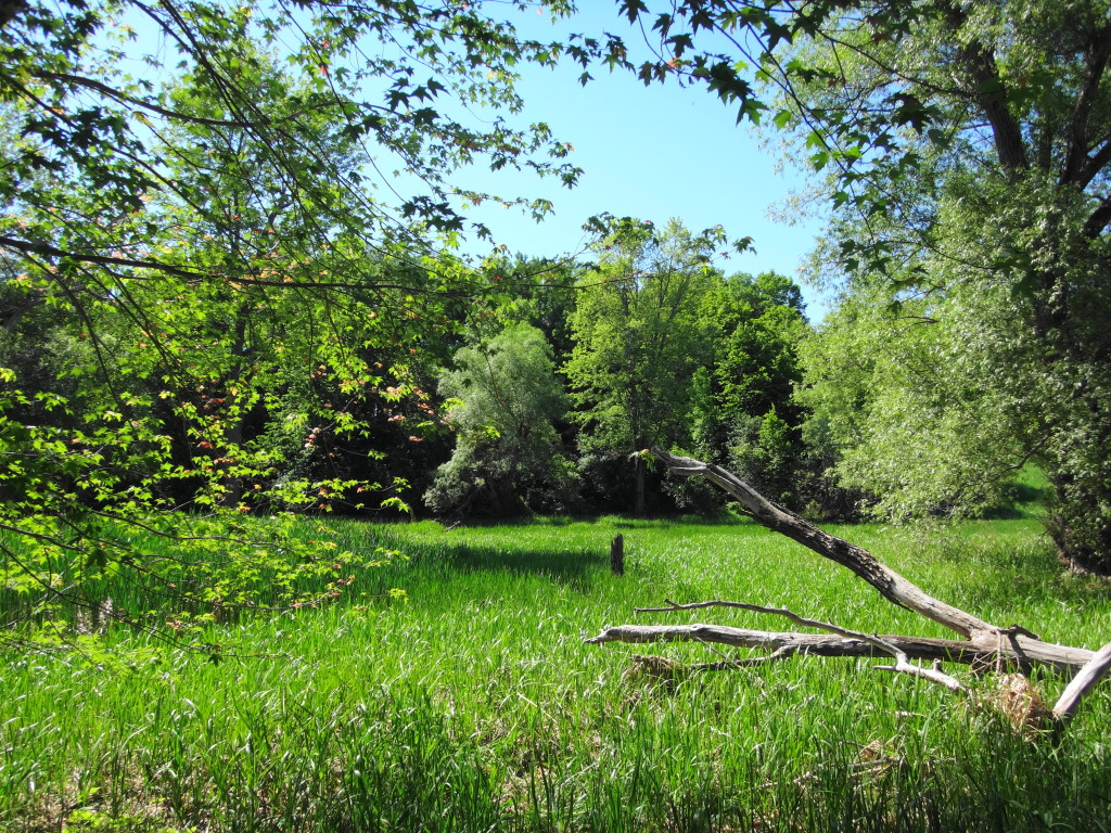 A scenic view of a meadow marsh, framed by tree branches.