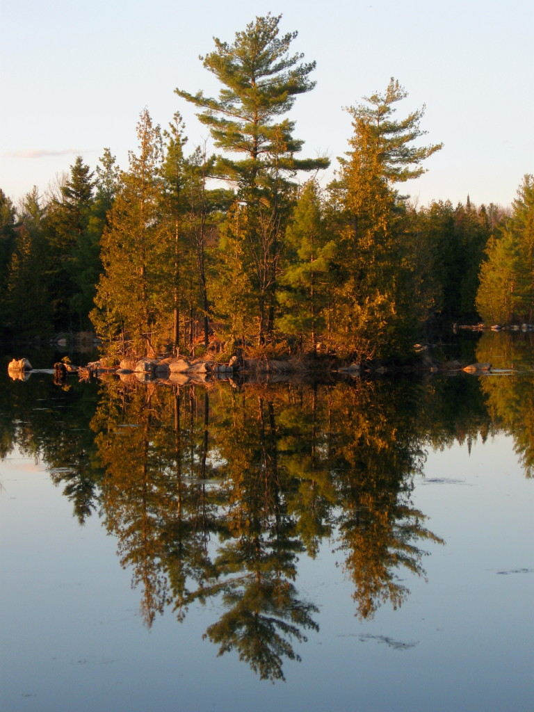 Pine trees reflect perfectly in the still waters of Morris Island Conservation Area.
