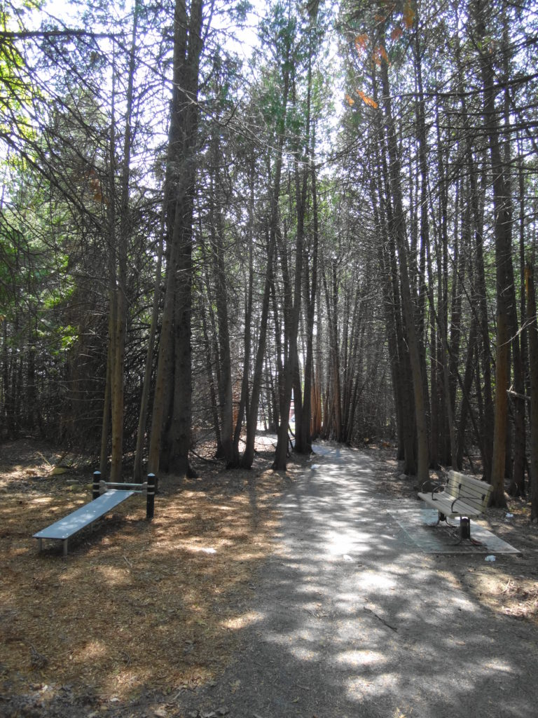 A stonedust trail runs through large cedars, beside a bench and an inclined sit-up board.