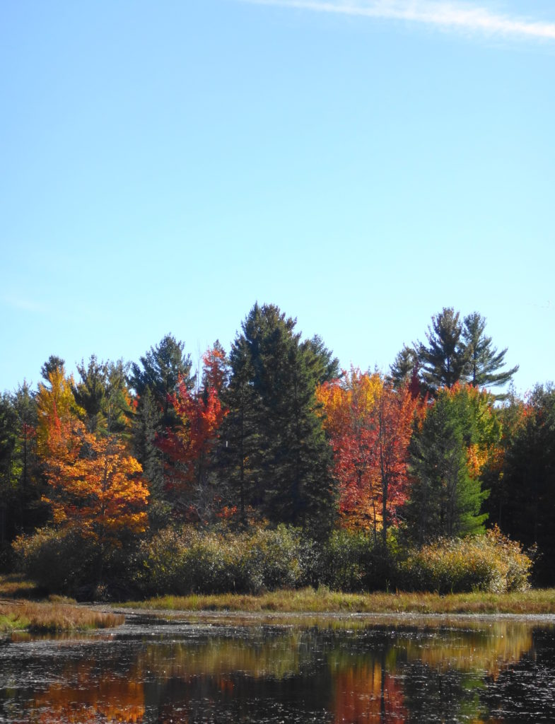 Autumn foliage glows red and gold along the edge of the Big Pond.