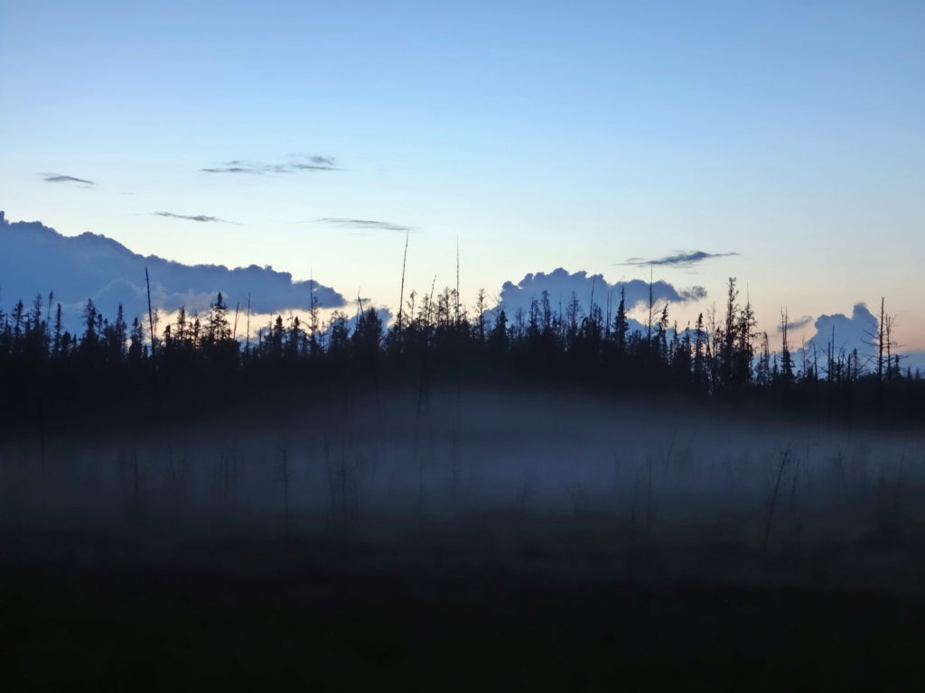 A low, evening mist blankets a spruce swamp.