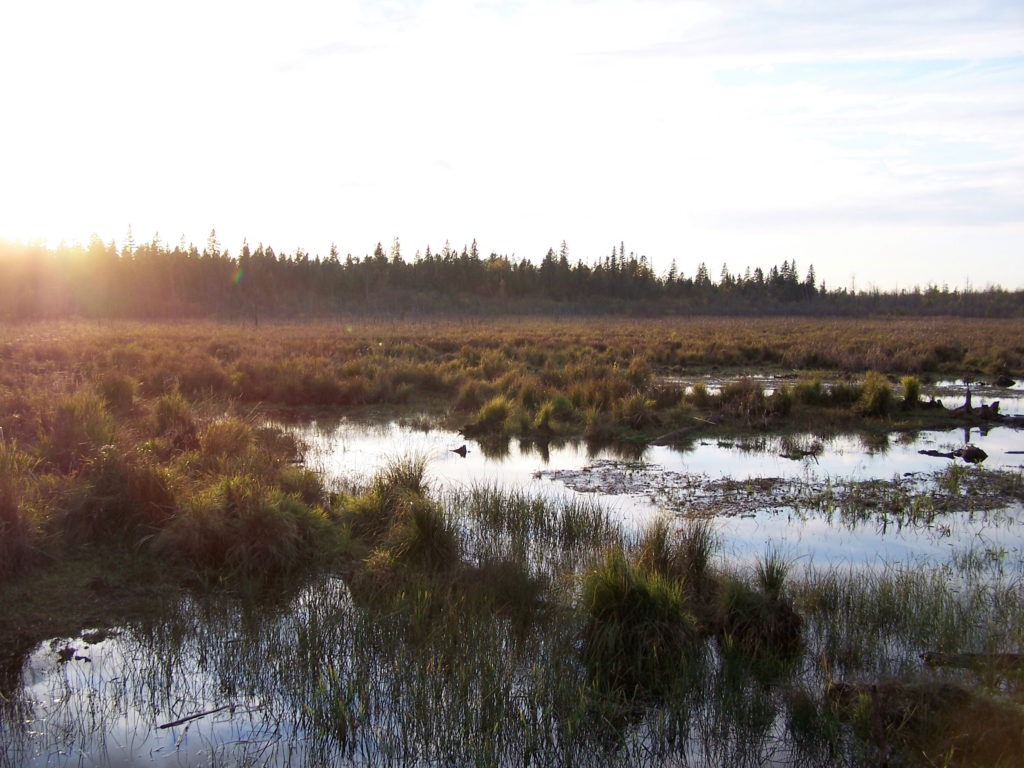 The sun sets on the Upper Poole Creek Wetland.
