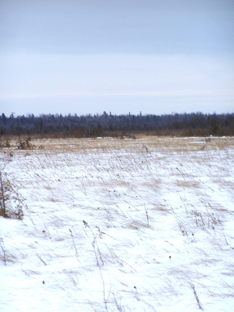 The wind sweeps across the snowy expanse of the Phragmites Fen.