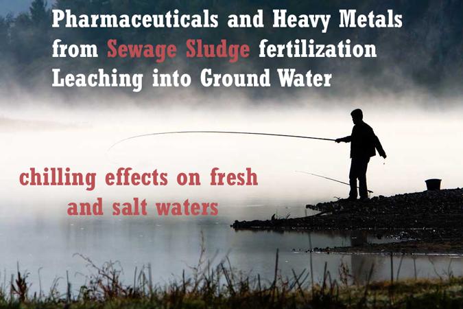 sewage-sludge-fertilization-effects-on-ground-water-fresh-salt-waters-pharmaceuticals-leaching-heavy-metals
