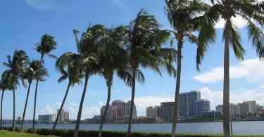 Palm Beach Scenic View