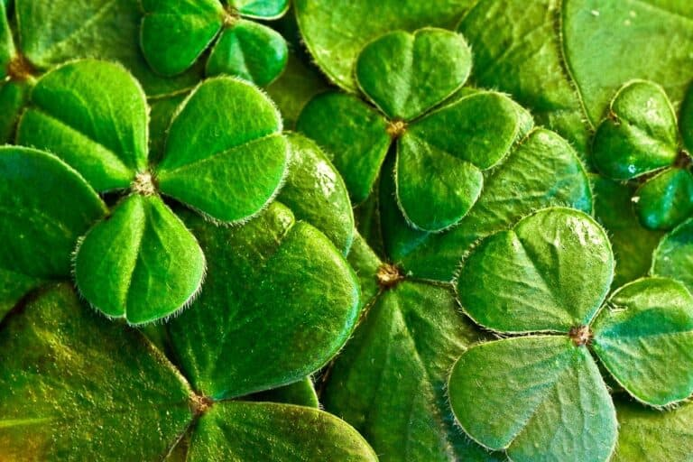 St. Patrick's Day History: The Fun, Traditions, and Folklore We Love