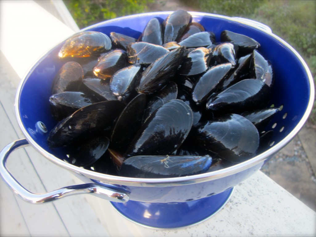 Two pounds of mussels, scrubbed, debearded and ready to steam.