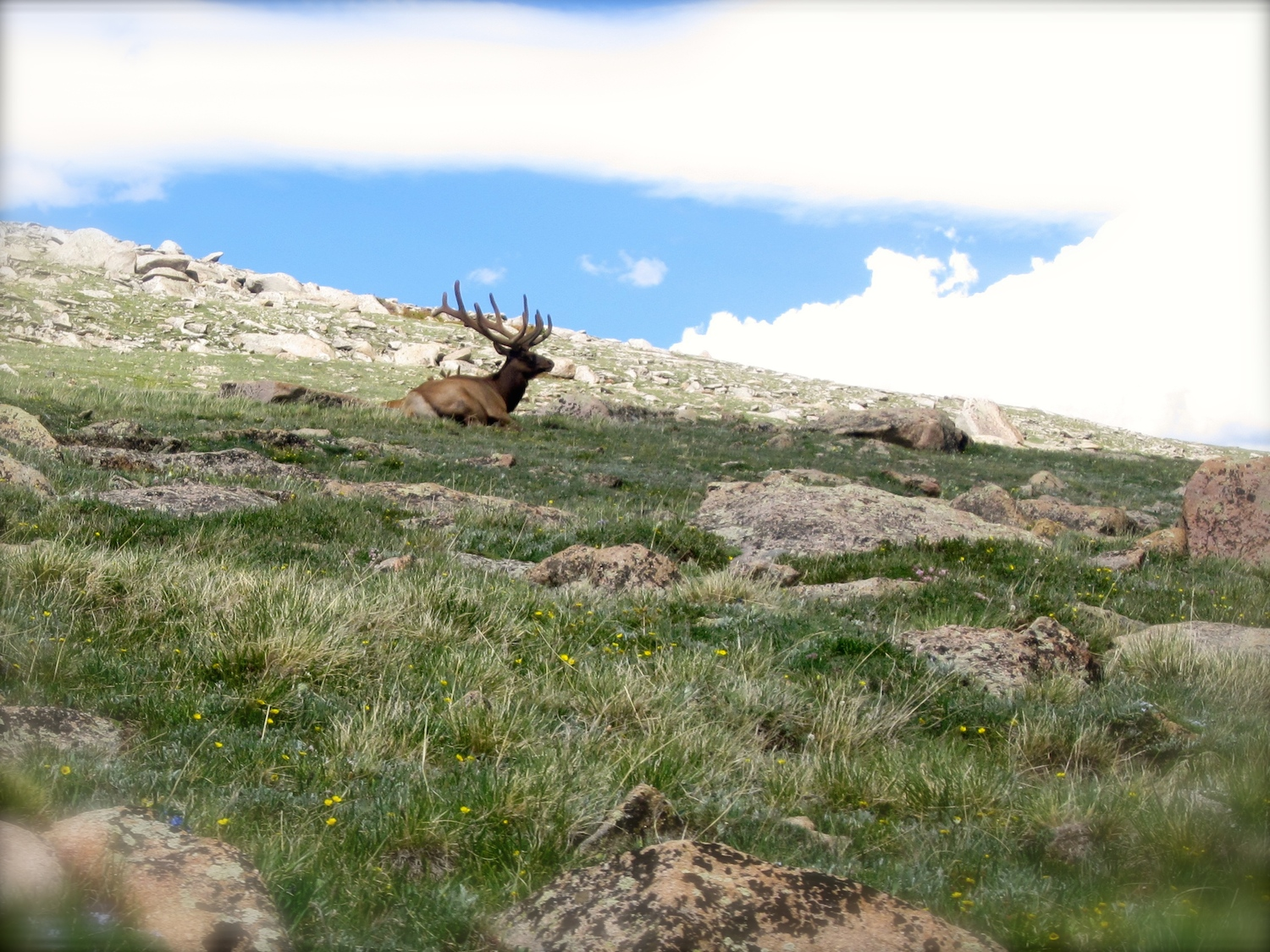 This handsome bull elk likes his own space. We saw hundreds of elk - Moms, Dads and babies as well as two beautiful moose.