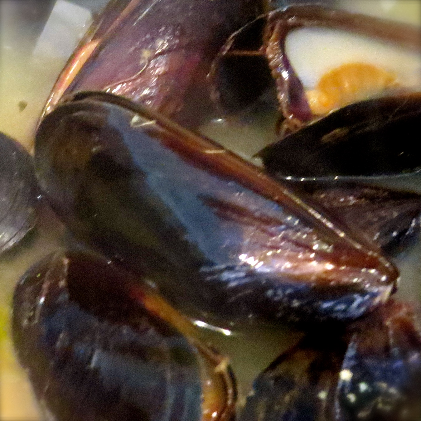 The mussels are put into the fish mixture at the last 2-4 minutes. Discard any closed mussels before serving.