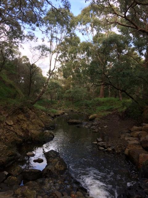 View from Darebin Creek
