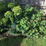 beautifying our garden