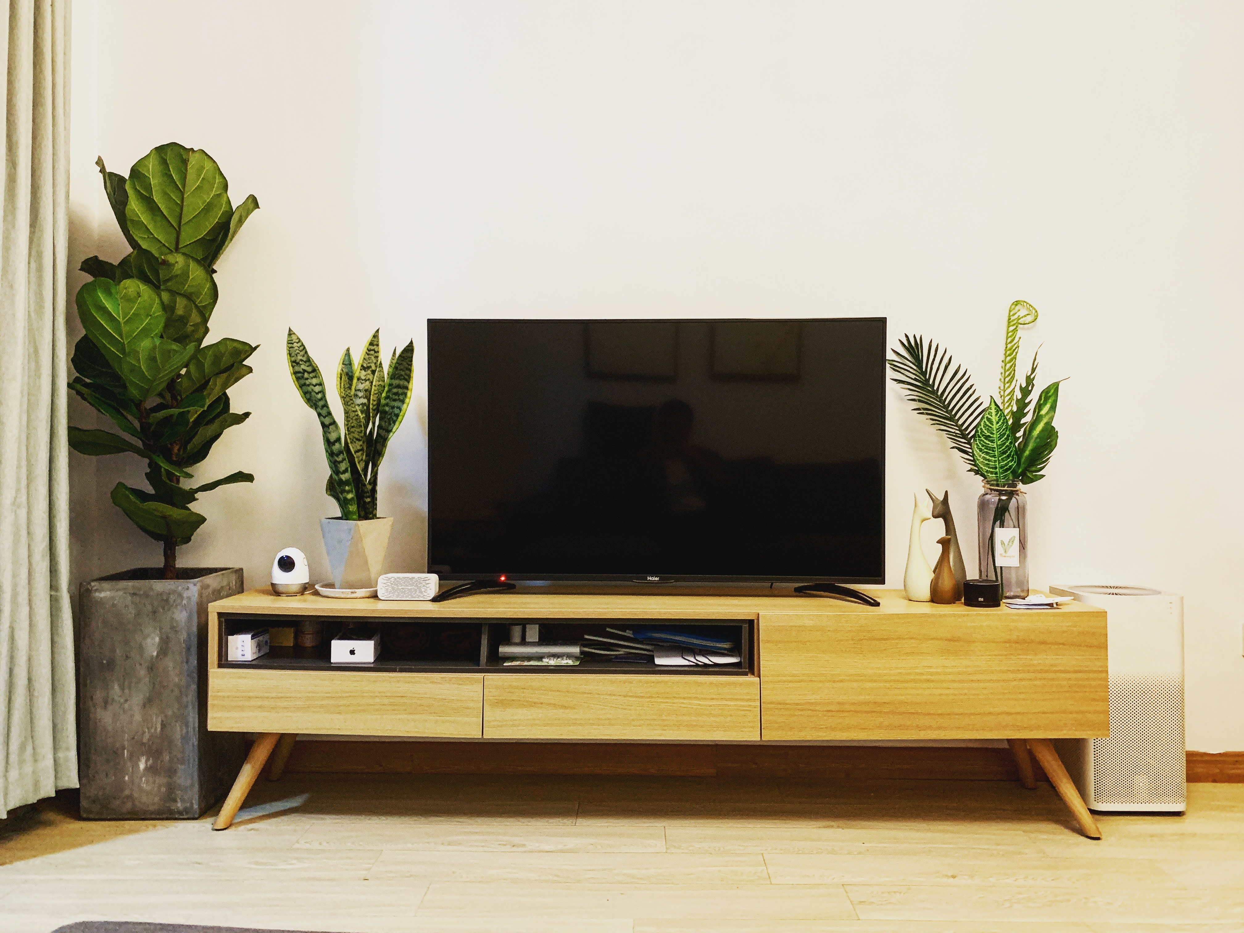 TV on stand with plants around