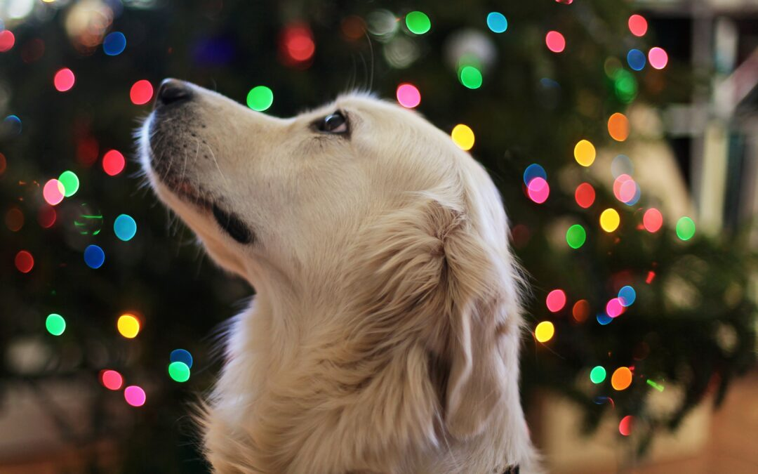 10 Holiday Foods That Are Toxic For Your Dog