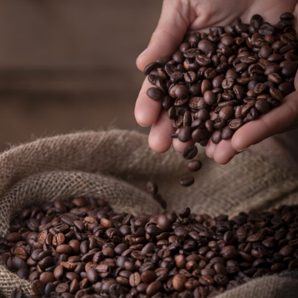Burlap sack of fresh coffee beans with hands
