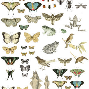 Entomology Etcetera 24x33 Decor Transfer™