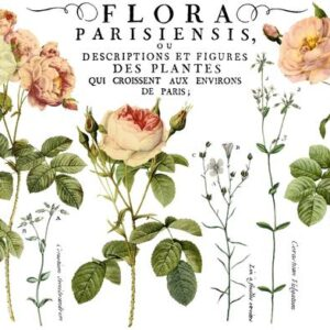 Flora Parisiensis 24x33 Decor Transfer™