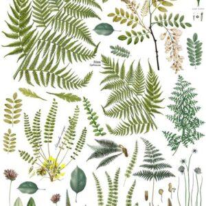 Fronds Botanical 24x33 Decor Transfer™