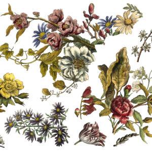 IOD Floral Anthology Transfer
