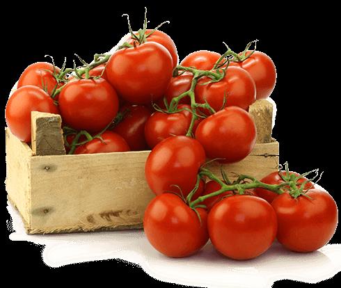 tomatoes-490x414