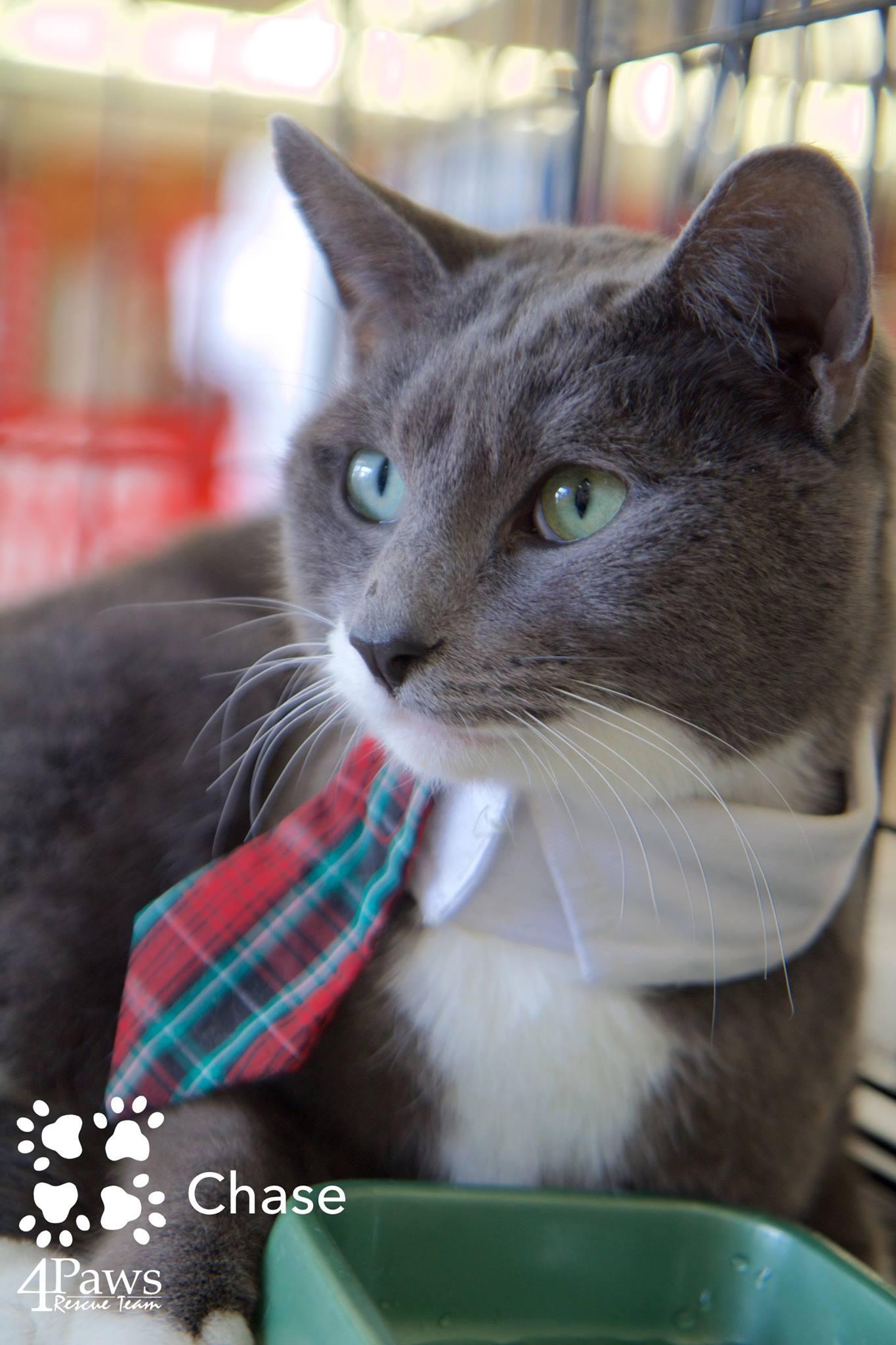 cat with tie