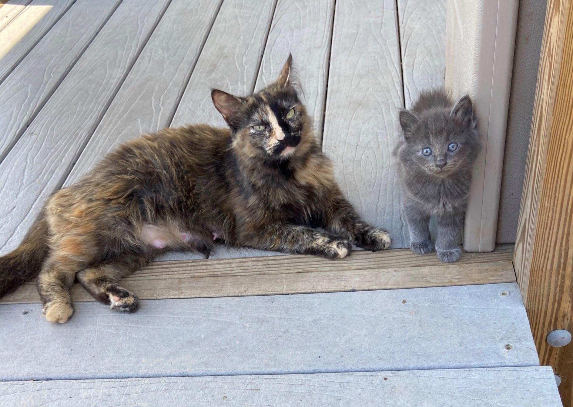 barn mouser cat and kitten