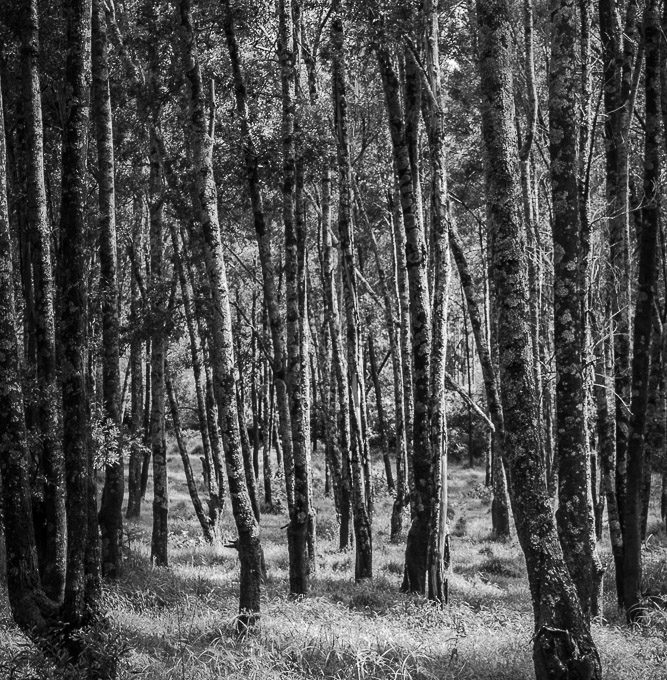 Sometimes you need to see the trees from the wood - Black and white pictures of the woods found in the Born Free Sanctuary in Ethiopia
