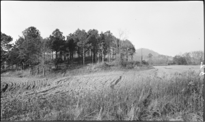 """Figure 4. 1917 Photograph of Mound B, Leake Site (Anonymous 1917). Original caption reads: """"Indian Mound on Leake Property, 4 Mi. S.W. of Cartersville"""""""