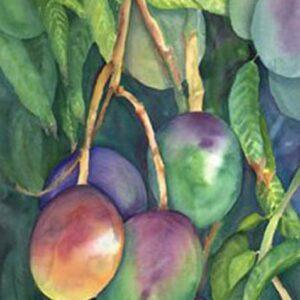 Mangos Nancy Forbes