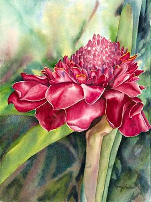 Torch Ginger Nancy Forbs