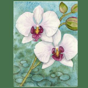 Phalaenopsis in Blue Giclée