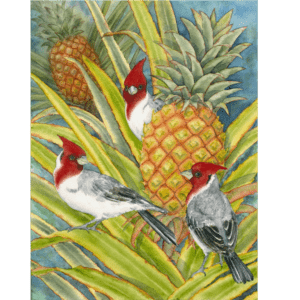 Brazilian Cardinals in Pineapple Patch Note Card